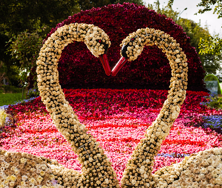 Flower arrangement of chrysanthemums in the form of swans in a public park