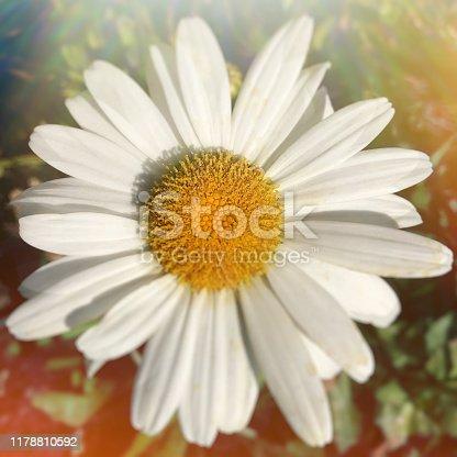 Chrysanthemum flower take multiple exposure, One-time imaging