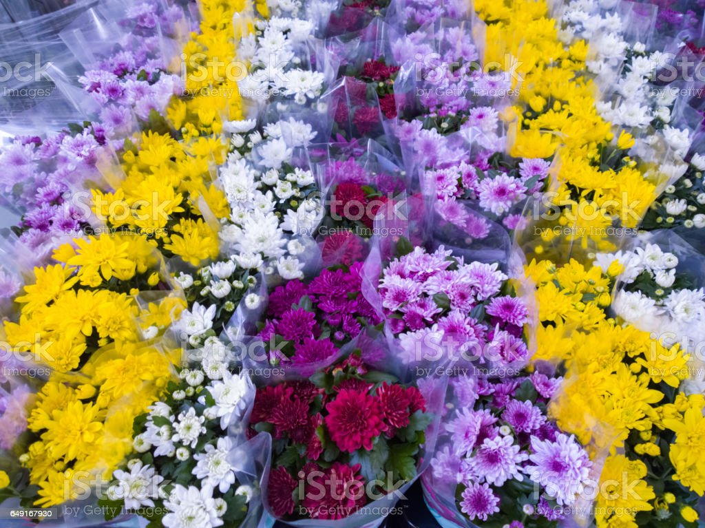 Chrysanthemum in store stock photo