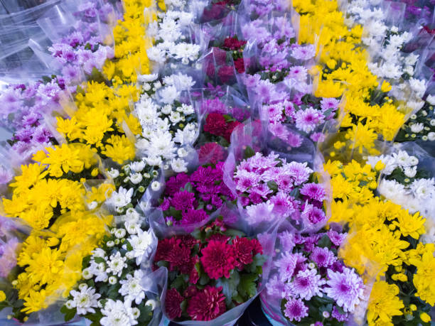 Chrysanthemum in store stock photo