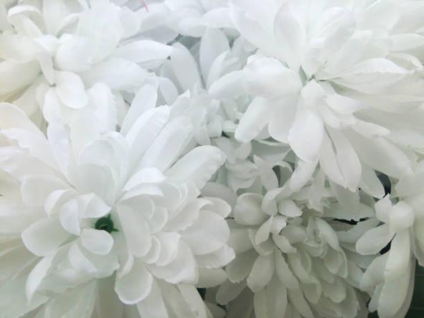 chrysanthemen auf weißer kunstblume - trauer abschied tod stock-fotos und bilder