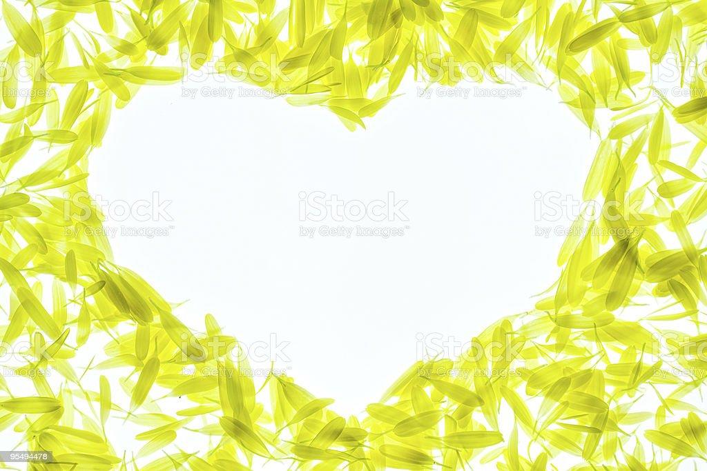 chrysanthemum petals royalty-free stock photo