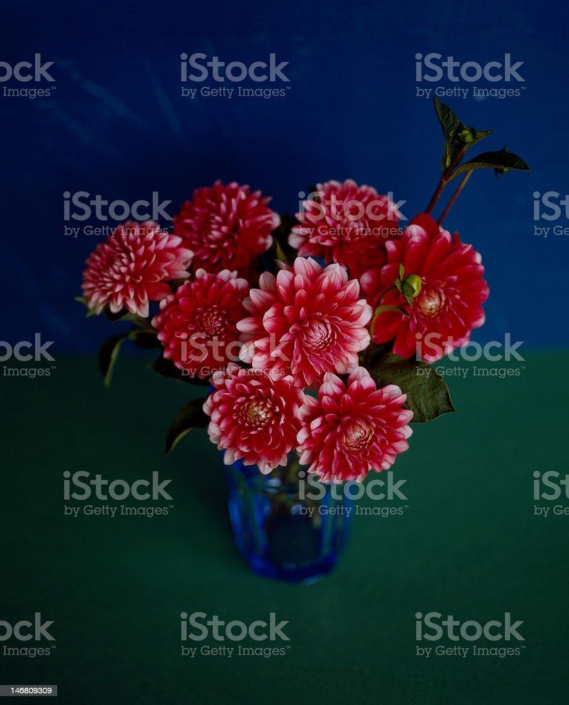 Chrysanthemum, Red flowers in vase stock photo