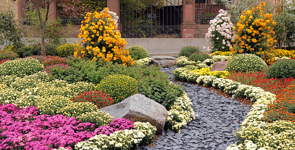 Slate-rock garden path between variety of different colored chrysanthemum flowers.