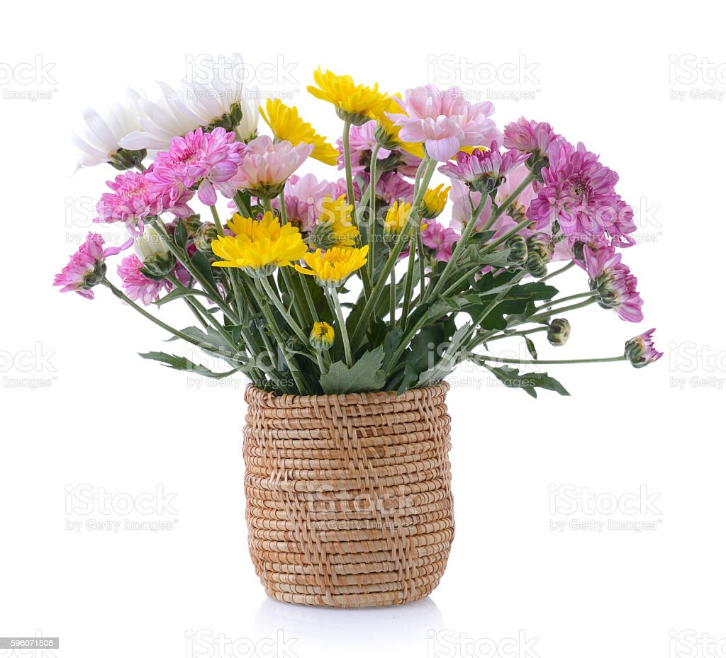 chrysanthemums in basket on white background royalty-free stock photo
