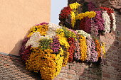 Colorful chrysanthemums hanging from a stone wall during the annual Chrysanthemum Festival in Lahr, Germany