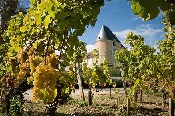 château d'yquem - patrick hutter stock-fotos und bilder