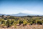 Chateauneuf-du-Pape, Mont Ventoux, Provence-Alpes-Côte d'Azur, Provence, France