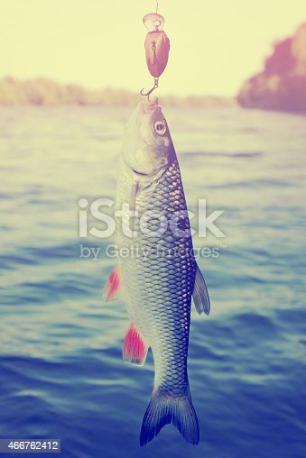Chub caught on plastic lure against water and sky, toned image