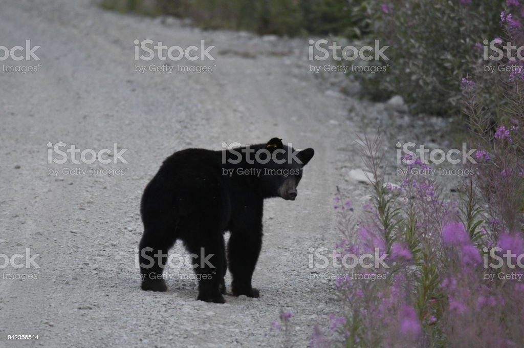 Black chubby bears, free gorgeous naked women video