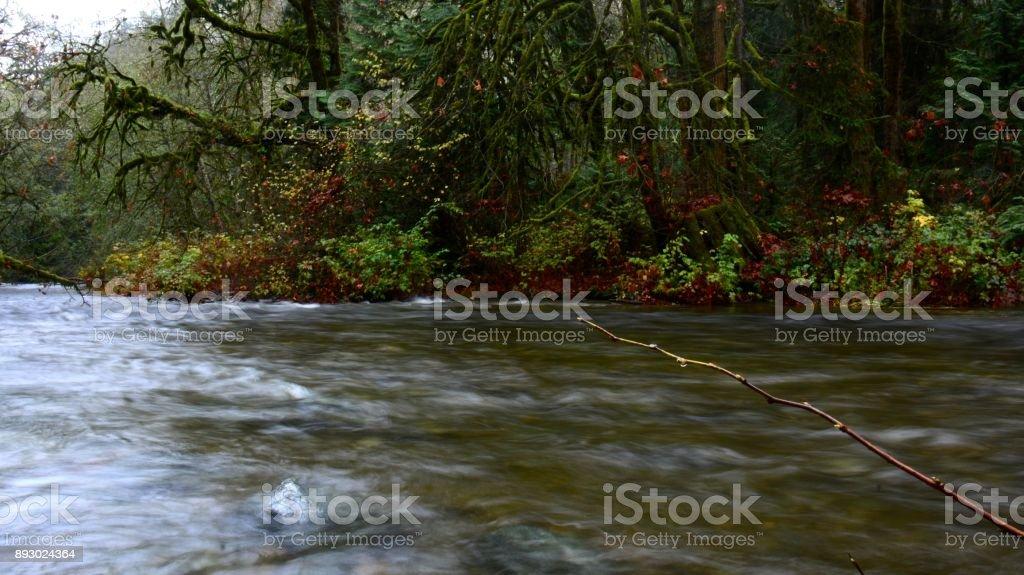 Chum Salmon Spawning stock photo