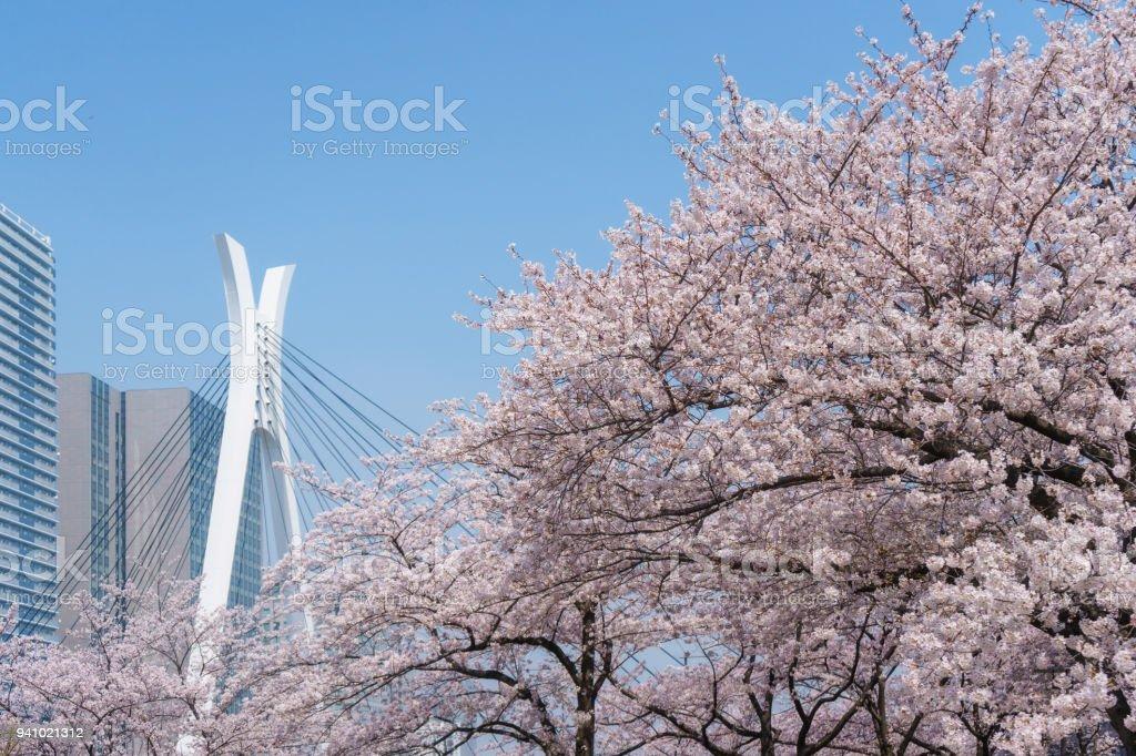 中央大橋と桜 ストックフォト