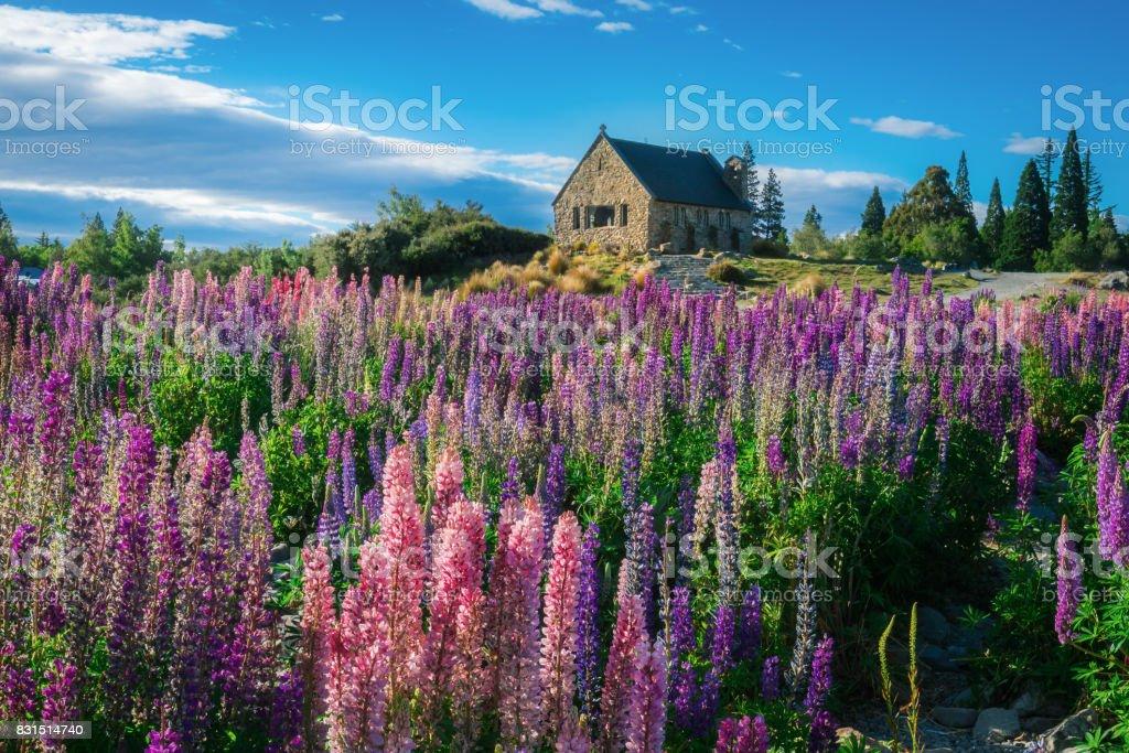 Church of the Good Shepherd and Lupine Field, Lake Tekapo stock photo