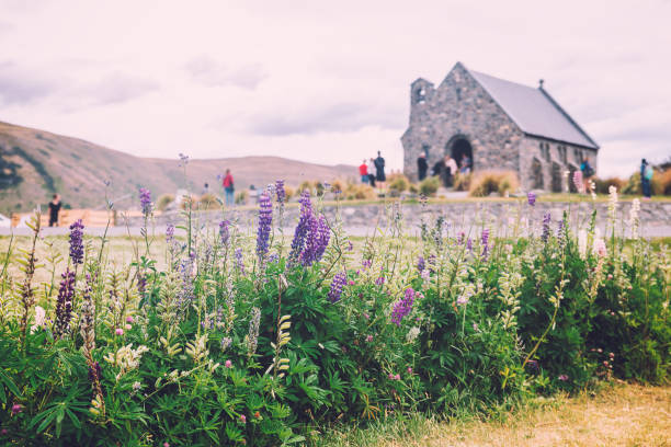 Church of the Good Shepherd and Lupine flowers at lake Tekapo, New Zealand stock photo