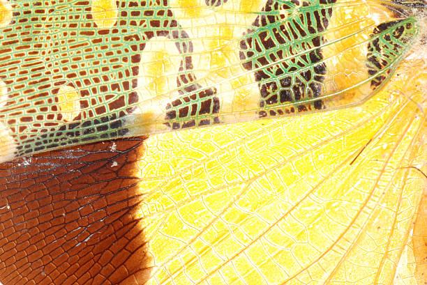 cicada bug wing green and yellow texture - locust swarm stockfoto's en -beelden