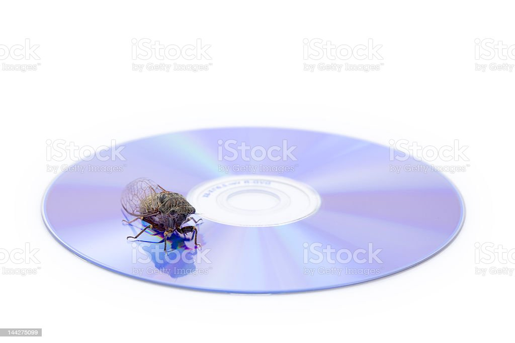 Cicada on CD stock photo