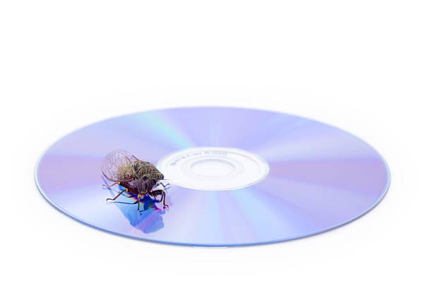 Zikade auf CD – Foto