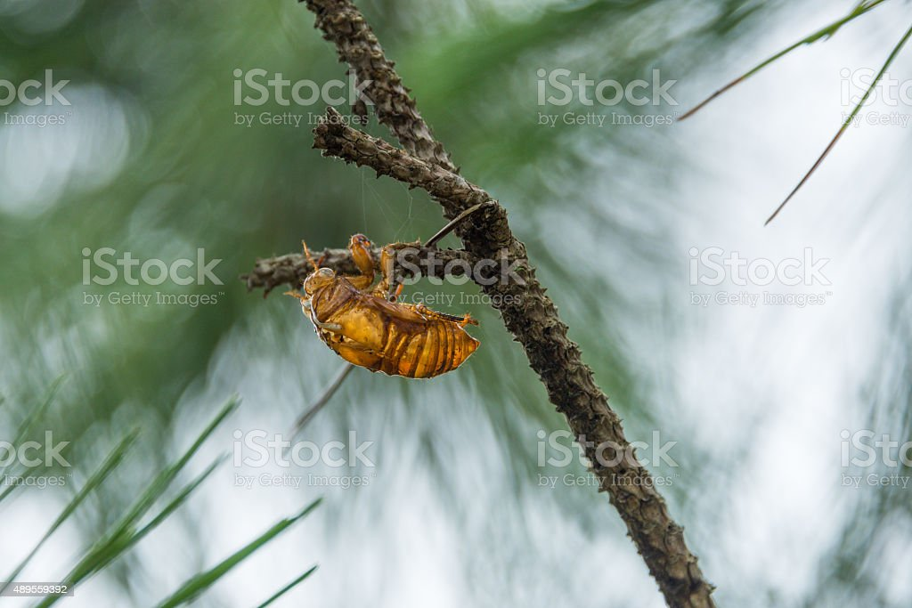 Cicada's Shed stock photo
