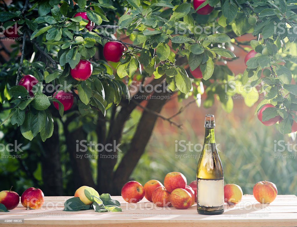 cider is under the apple tree branch stock photo