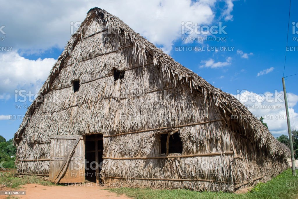 Cigar factory Cuba. Hut made of palm leaves. Manual production of Cuban cigars. Cultivation of Tobacco in Vinales. – zdjęcie