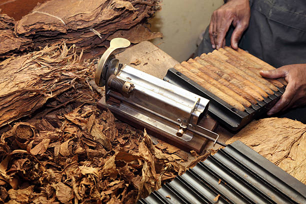 Cigar making stock photo