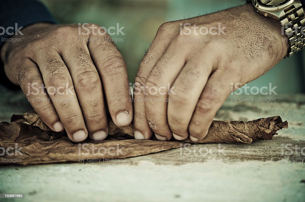Cigar roller Man rolling tobacco leaf, Tobacco factory, Pinar del Rio, Cuba Adult Stock Photo