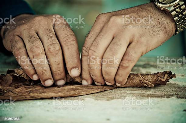 Cigar Roller Stock Photo - Download Image Now