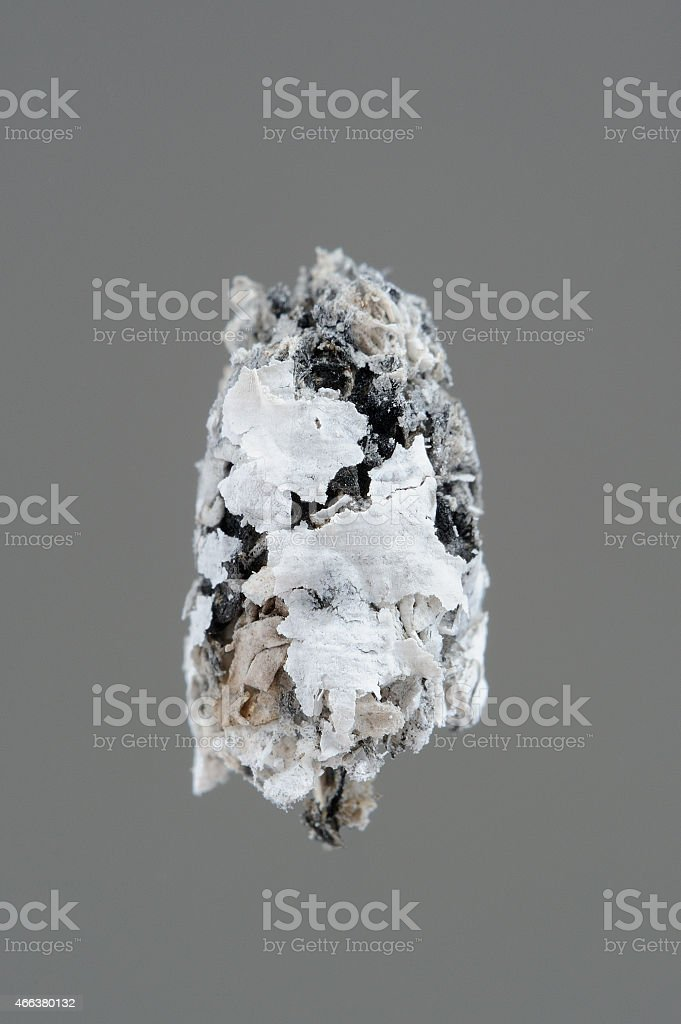 Cigarette Ash Close-Up on Gray Background stock photo