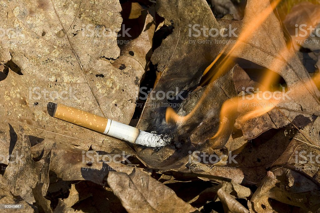 cigarette burning leaves stock photo