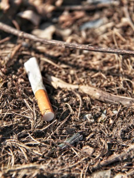 cigarett butt - malin strandvall bildbanksfoton och bilder