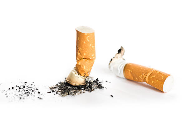 cigarette butt as a household insecticide