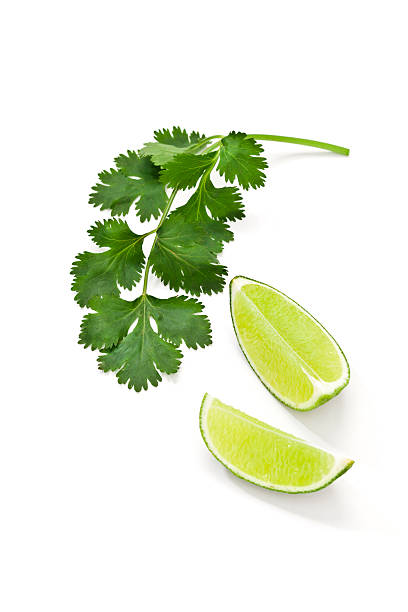 Cilantro and lime Fresh organic cilantro twig with two lime pieces isolated on white background cilantro stock pictures, royalty-free photos & images
