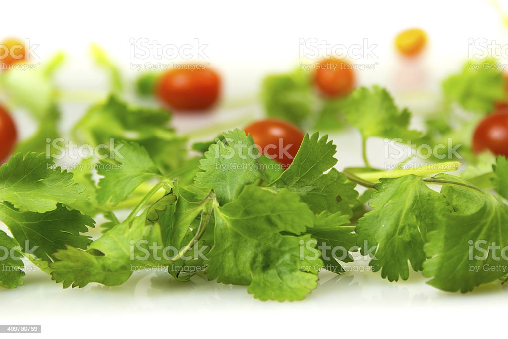 Cilantro and Tomatoes stock photo