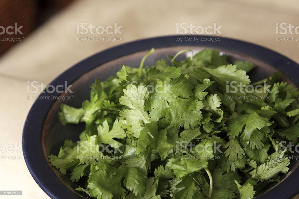 Cilantro in a Bowl royalty-free stock photo