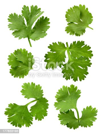 Cilantro Isolated on a white background