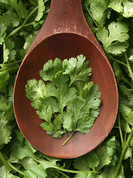 Cilantro Top view of wooden spoon full of fresh cilantro leaves  cilantro stock pictures, royalty-free photos & images