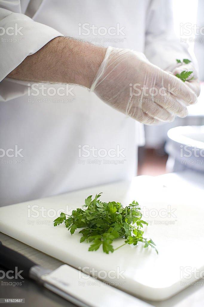 cilantro royalty-free stock photo
