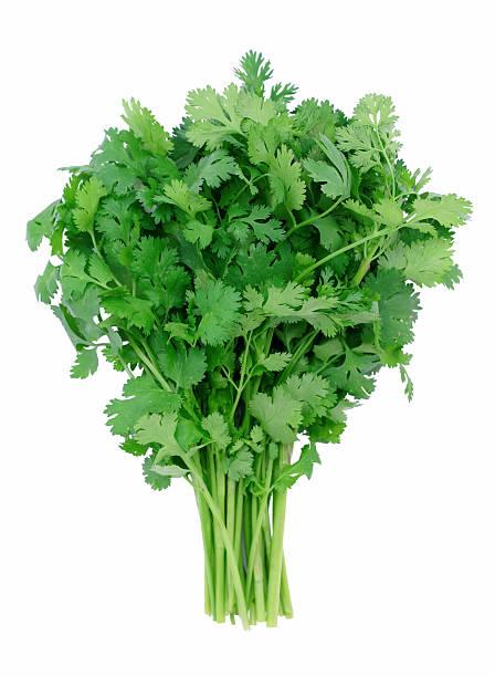 """restaurant """"cilantro"""" - bund stock-fotos und bilder"""