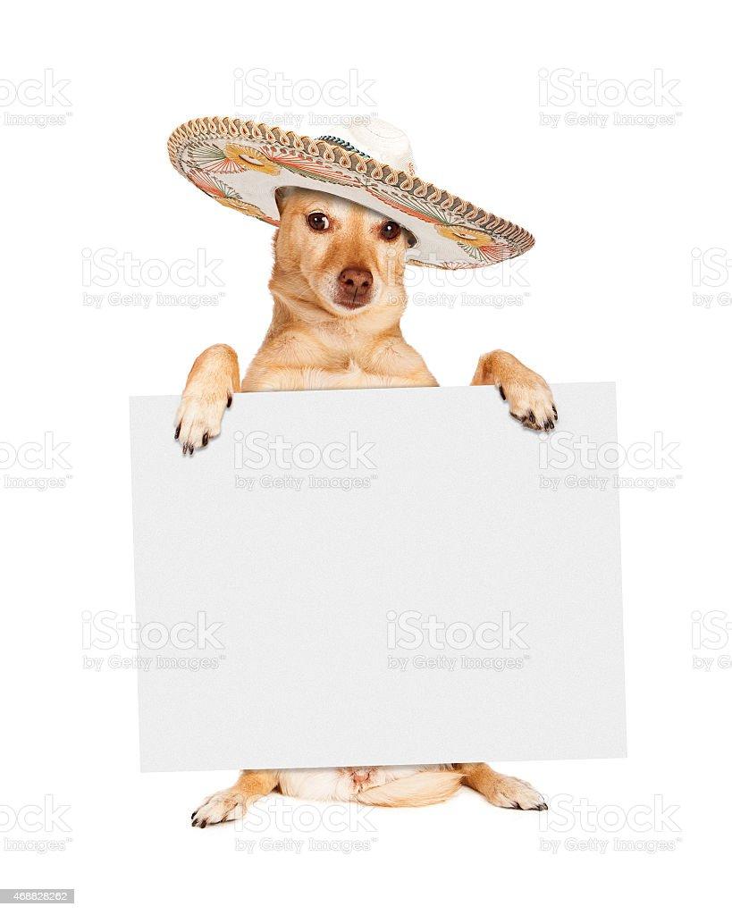 Cinco De Mayo Dog Carrying Blank Sign stock photo