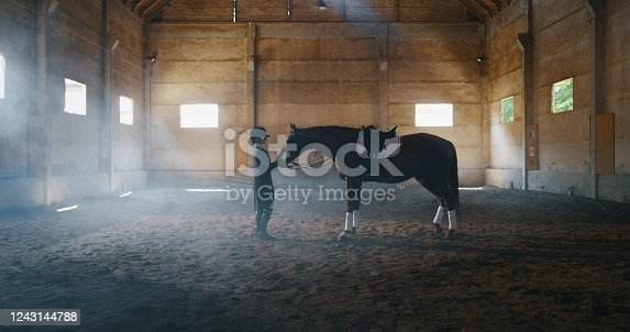 Cinematic shot of young female horsemanship master dressed in a professional apparel is caressing her bay horse before to start practising exercises for competition of horse racing and dressage.