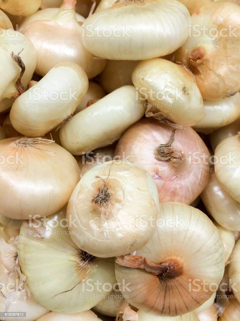 cipollini onions stock photo