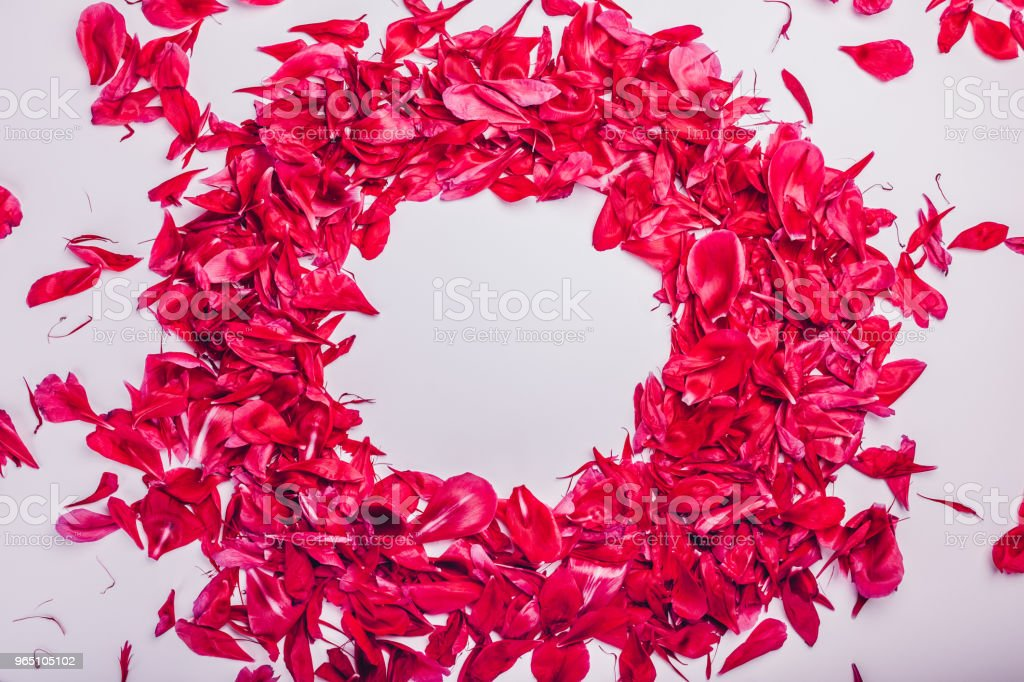 Circle made of peony flowers petals. Floral background. Space zbiór zdjęć royalty-free