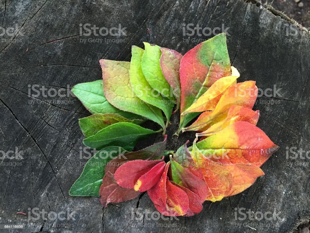 Circle of autumn leaves foto stock royalty-free