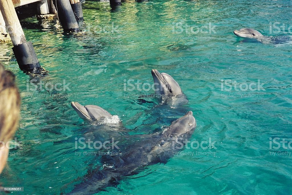 Circle of Dolphins stock photo