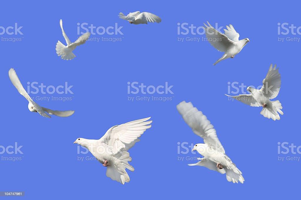 Circle of Doves stock photo