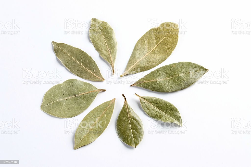 Circle of laurel leaves royalty-free stock photo
