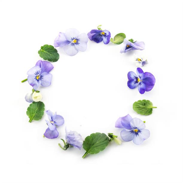 Kreis von Stiefmütterchen Blüten und Blättern isoliert auf einem weißen Hintergrund, Frühling Kranz Konzept, erhöhte Ansicht von oben, Textfreiraum – Foto