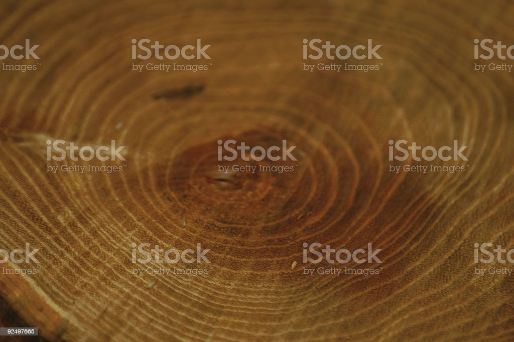 circles of the tree's life royalty-free stock photo