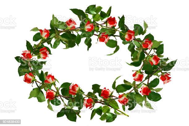 Circlet of flowers red with white roses and green leaves isolated picture id924838430?b=1&k=6&m=924838430&s=612x612&h=zyvceda1abj8skf08frrcg6qfmlefxsbjauzr4grtok=