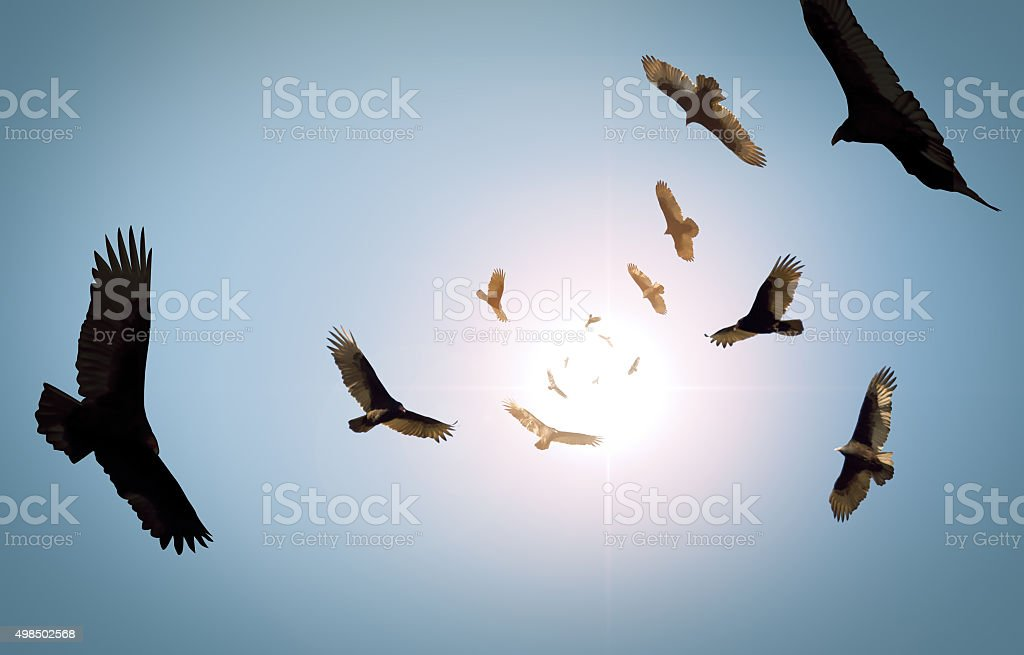 Circling Vultures stock photo